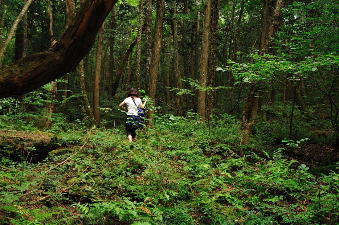 Ngắm rừng cong Ba Lan, rừng ma Romania, rừng tre Nhật - Ảnh 12.