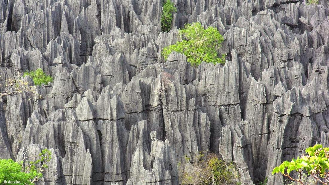 Ngắm rừng cong Ba Lan, rừng ma Romania, rừng tre Nhật - Ảnh 5.