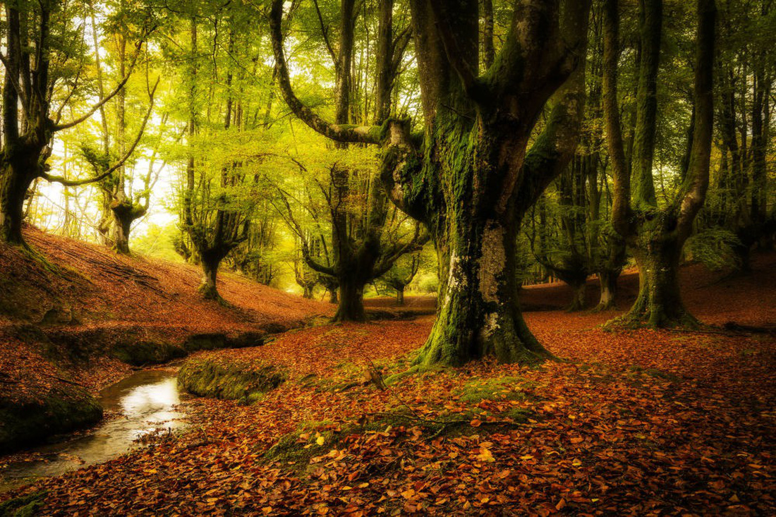 Ngắm rừng cong Ba Lan, rừng ma Romania, rừng tre Nhật - Ảnh 6.