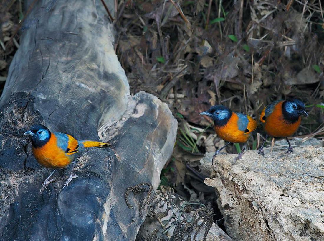 Khi Asean, Nhật, Hàn Quốc cùng bảo vệ chim hoang dã - Ảnh 11.