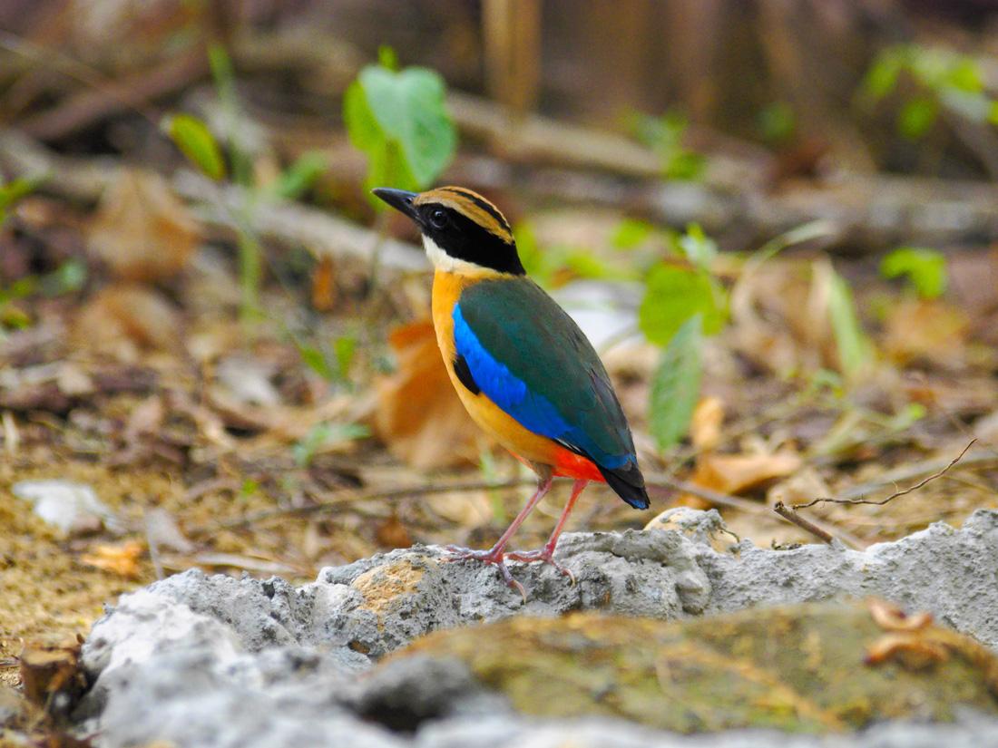 Khi Asean, Nhật, Hàn Quốc cùng bảo vệ chim hoang dã - Ảnh 10.