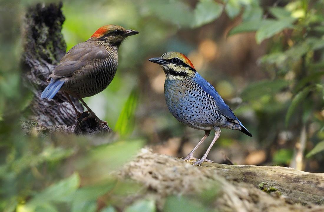 Khi Asean, Nhật, Hàn Quốc cùng bảo vệ chim hoang dã - Ảnh 4.