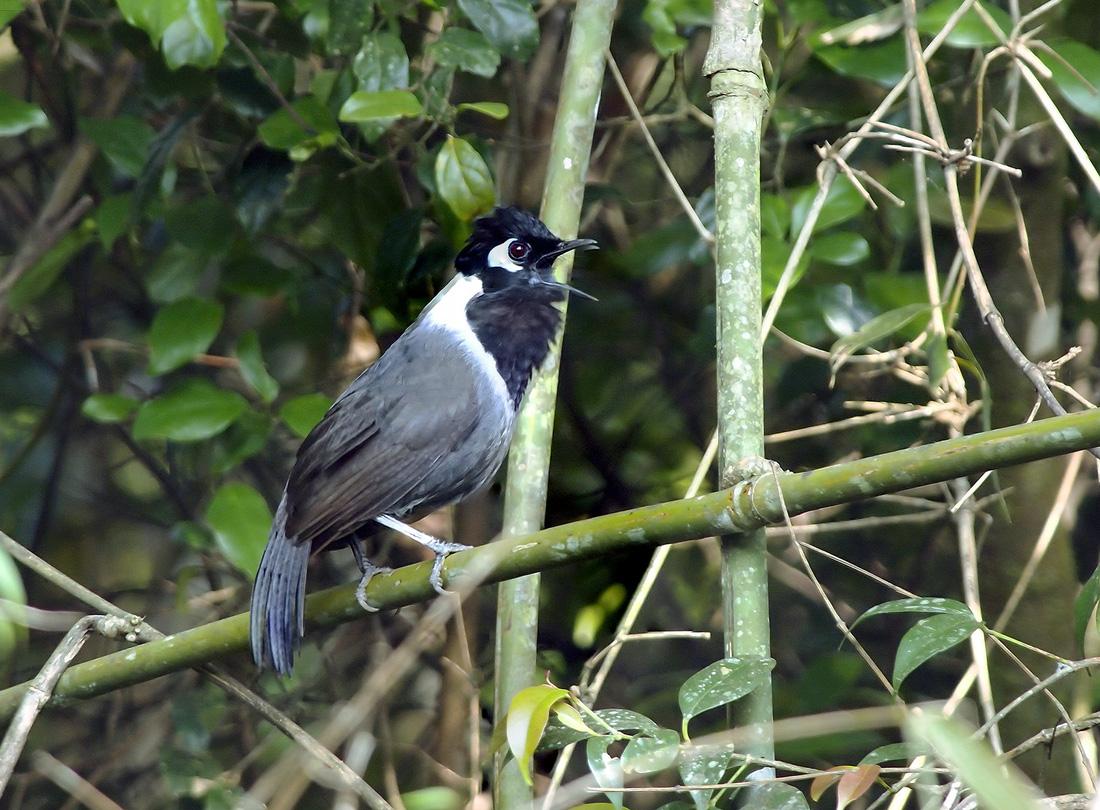 Khi Asean, Nhật, Hàn Quốc cùng bảo vệ chim hoang dã - Ảnh 9.