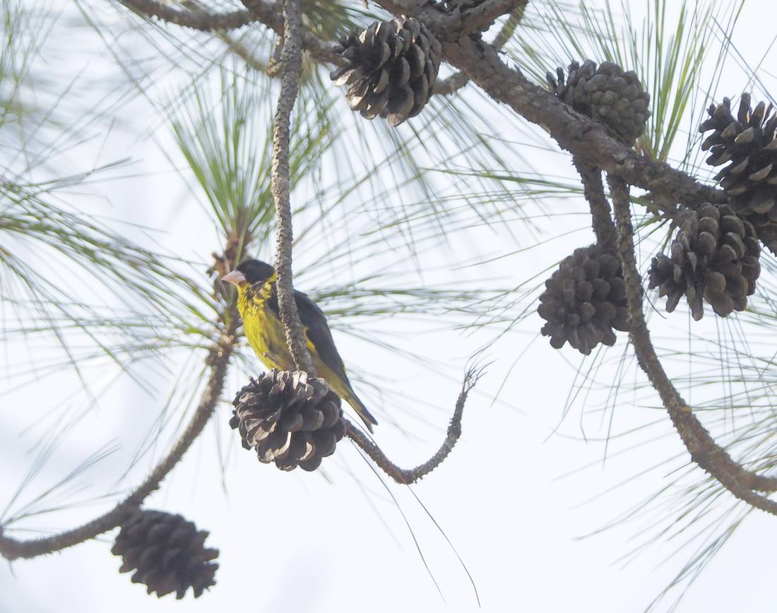 Khi Asean, Nhật, Hàn Quốc cùng bảo vệ chim hoang dã - Ảnh 7.