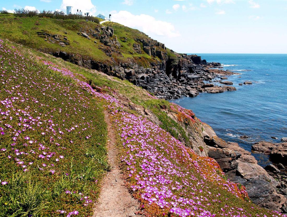 Đến 'xứ sở thần tiên' Cornwall, nghe 'thiên tình cổ' Tristan và Isolde - Ảnh 5.