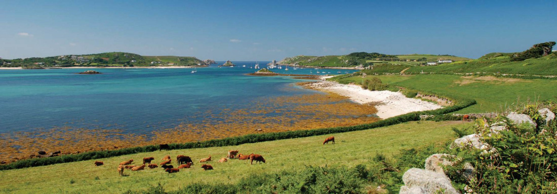 Đến 'xứ sở thần tiên' Cornwall, nghe 'thiên tình cổ' Tristan và Isolde - Ảnh 3.