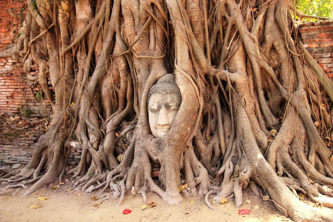 Một ngày thú vị ở cố đô Ayutthaya - Ảnh 5.