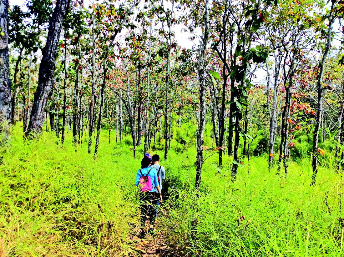 Thám hiểm rừng khộp Yok Don - Ảnh 3.