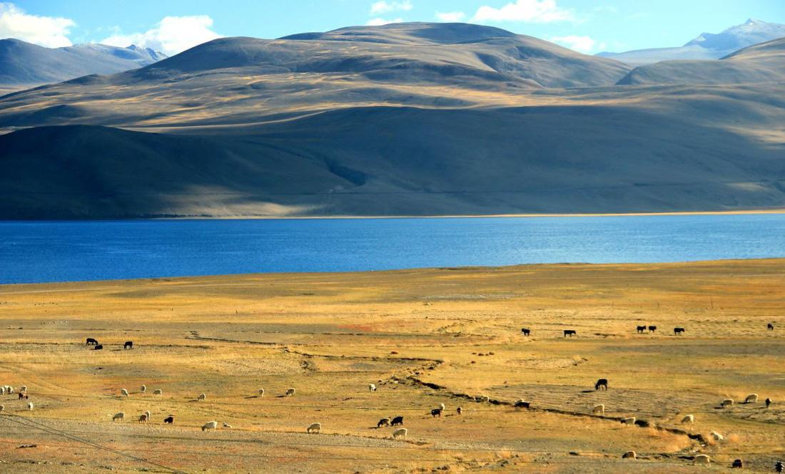 Làng du mục Korzok bình yên bên hồ Tso Moriri - Ảnh 7.