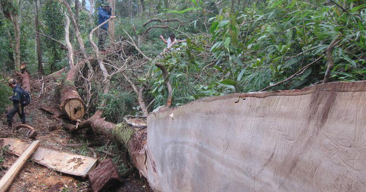Bắt hai trạm trưởng bảo vệ rừng ở Nghệ An