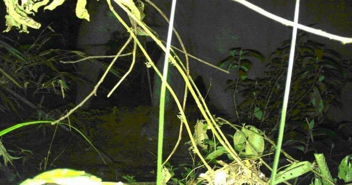 Voi rừng bất ngờ xuất hiện ở Vườn quốc gia Vũ Quang, Hà Tĩnh