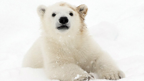 Ảnh mẹ con gấu Bắc cực sưởi ấm trái tim - Ảnh 8.