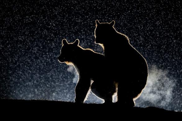 'Cú mèo té cây' giành giải ảnh động vật vui nhộn 2017 - Ảnh 14.