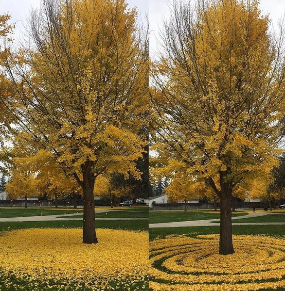 Những tác phẩm nghệ thuật từ lá cây rụng - Ảnh 7.