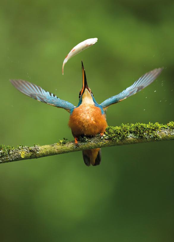 Ngắm thế giới chim chóc kỳ thú đoạt giải ảnh quốc tế - Ảnh 10.