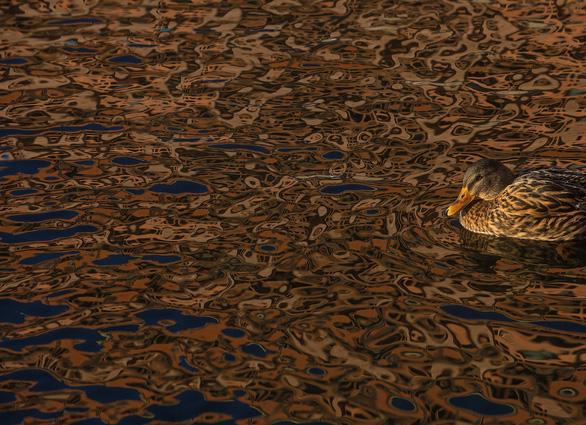 Ngắm thế giới chim chóc kỳ thú đoạt giải ảnh quốc tế - Ảnh 11.