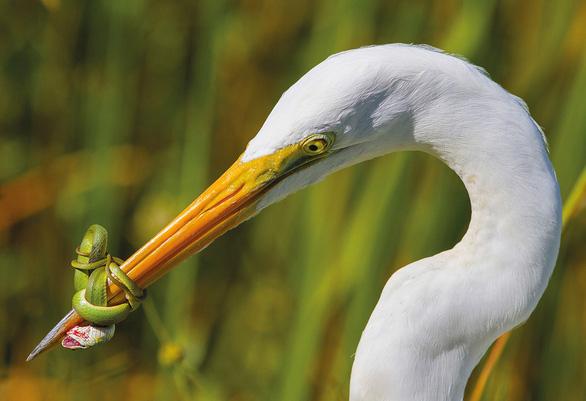 Ngắm thế giới chim chóc kỳ thú đoạt giải ảnh quốc tế - Ảnh 12.