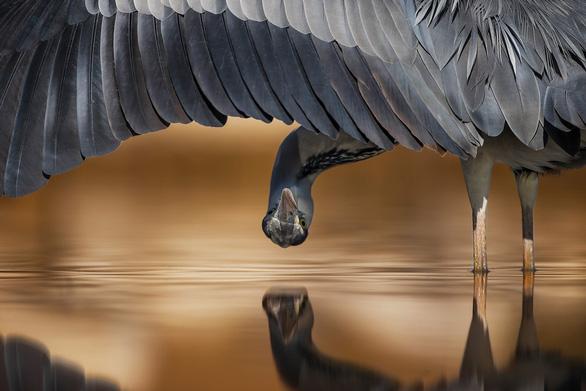 Ngắm thế giới chim chóc kỳ thú đoạt giải ảnh quốc tế - Ảnh 15.