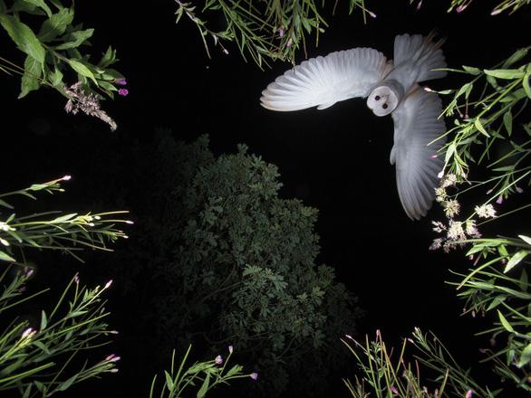 Ngắm thế giới chim chóc kỳ thú đoạt giải ảnh quốc tế - Ảnh 17.