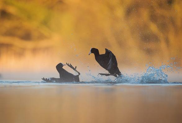Ngắm thế giới chim chóc kỳ thú đoạt giải ảnh quốc tế - Ảnh 3.