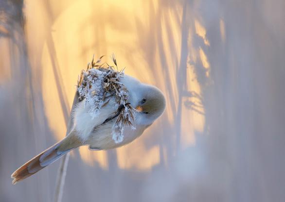 Ngắm thế giới chim chóc kỳ thú đoạt giải ảnh quốc tế - Ảnh 5.