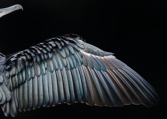 Ngắm thế giới chim chóc kỳ thú đoạt giải ảnh quốc tế - Ảnh 7.