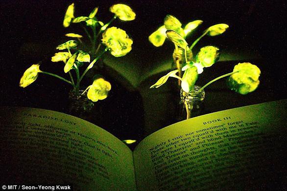 Cây phát sáng trong đêm như đèn - Ảnh 2.