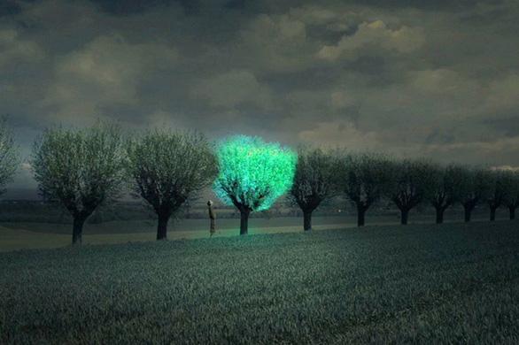 Cây phát sáng trong đêm như đèn - Ảnh 3.