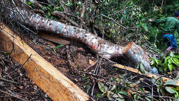 Sẽ kỷ luật cán bộ để tan nát rừng đầu nguồn Lào Cai, Yên Bái - Ảnh 7.