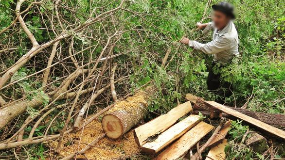 Sẽ kỷ luật cán bộ để tan nát rừng đầu nguồn Lào Cai, Yên Bái - Ảnh 5.