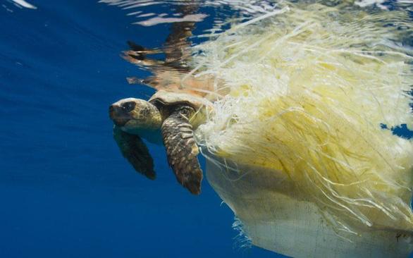 Báo động rác thải nhựa tận diệt rùa biển - Ảnh 1.