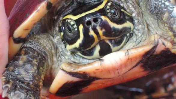 Phát hiện nhiều loài mới ở Việt Nam và vùng Mekong - Ảnh 5.