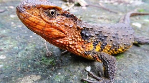 Phát hiện nhiều loài mới ở Việt Nam và vùng Mekong - Ảnh 1.
