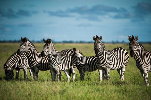 Ngắm châu Phi mê hoặc trong phim tài liệu National Geographic - Ảnh 10.