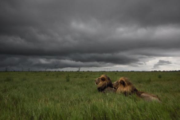Ngắm châu Phi mê hoặc trong phim tài liệu National Geographic - Ảnh 4.
