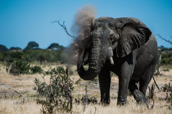 Ngắm châu Phi mê hoặc trong phim tài liệu National Geographic - Ảnh 3.