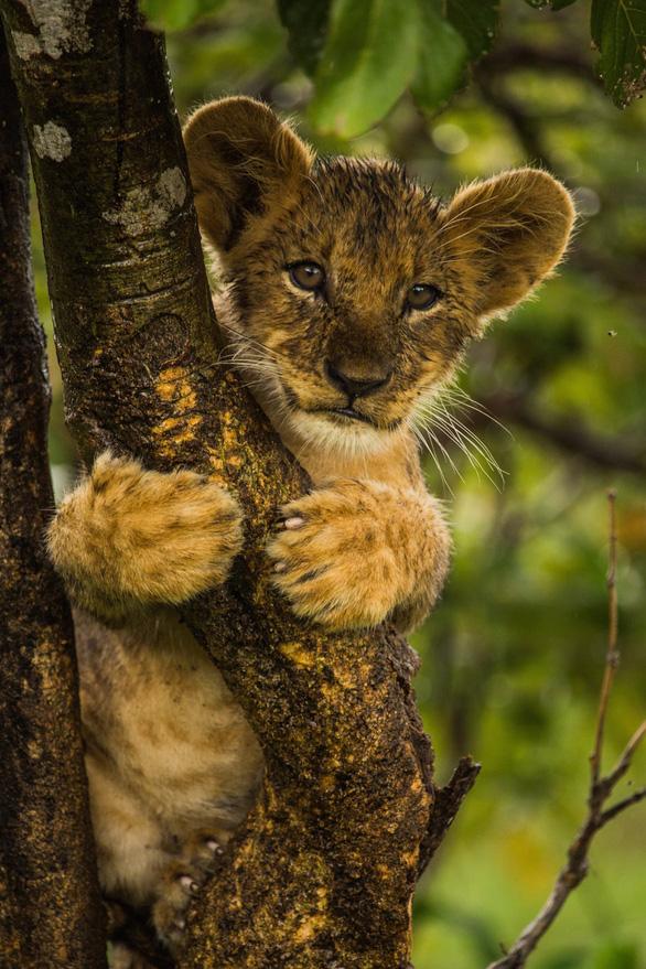 Ngắm châu Phi mê hoặc trong phim tài liệu National Geographic - Ảnh 2.