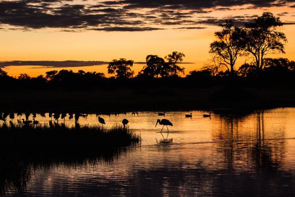 Ngắm châu Phi mê hoặc trong phim tài liệu National Geographic - Ảnh 11.