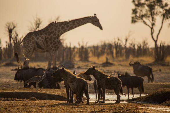 Ngắm châu Phi mê hoặc trong phim tài liệu National Geographic - Ảnh 9.