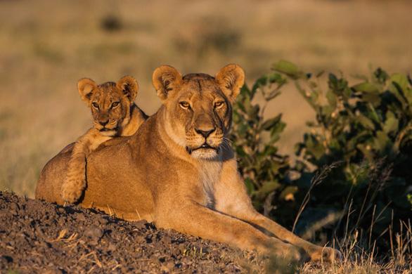 Ngắm châu Phi mê hoặc trong phim tài liệu National Geographic - Ảnh 8.