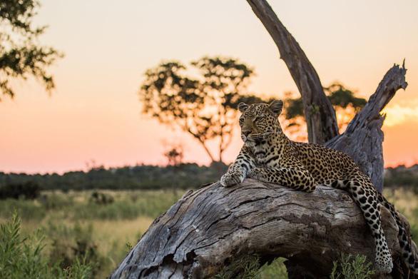 Ngắm châu Phi mê hoặc trong phim tài liệu National Geographic - Ảnh 7.