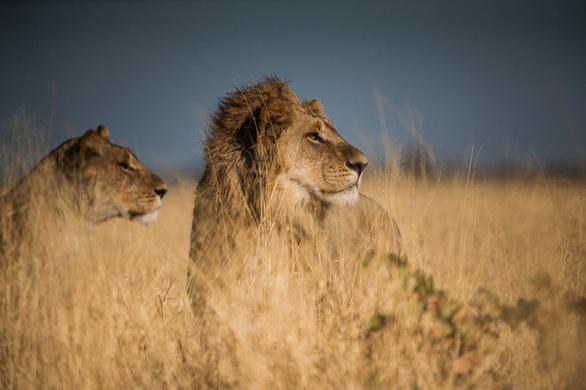Ngắm châu Phi mê hoặc trong phim tài liệu National Geographic - Ảnh 5.