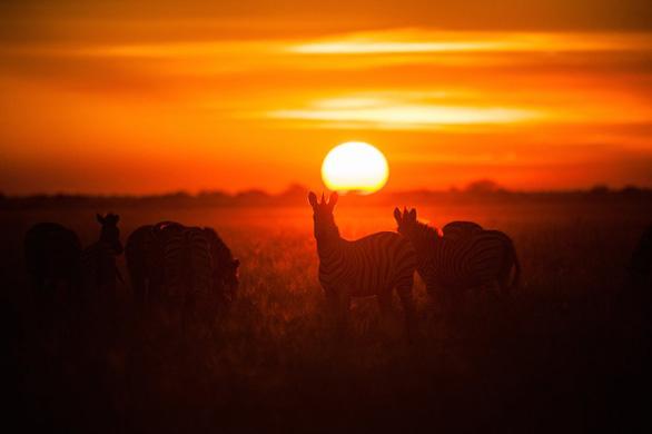 Ngắm châu Phi mê hoặc trong phim tài liệu National Geographic - Ảnh 1.