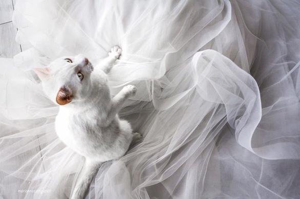 Ảnh cưới dễ thương chụp cùng mèo cưng - Ảnh 5.