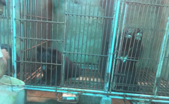 Nhận tin nuôi gấu trái phép, đến kiểm tra thấy nuôi… gà - Ảnh 1.