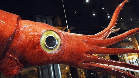 Sinh vật nào lớn nhất đại dương? - Ảnh 2.