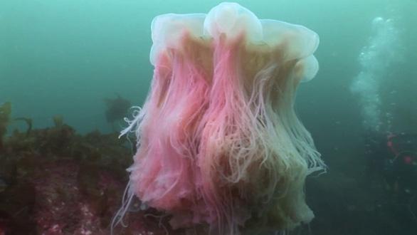 Sinh vật nào lớn nhất đại dương? - Ảnh 3.