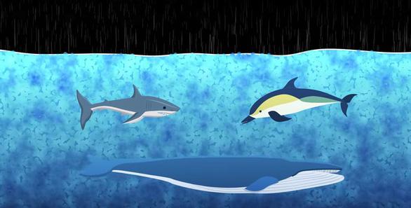Điều gì xảy ra với sinh vật biển khi có bão? - Ảnh 1.