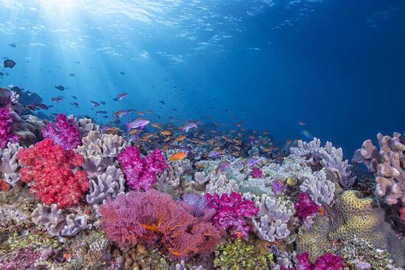 Điều gì xảy ra với sinh vật biển khi có bão? - Ảnh 5.