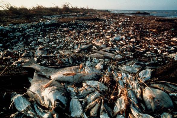Điều gì xảy ra với sinh vật biển khi có bão? - Ảnh 4.